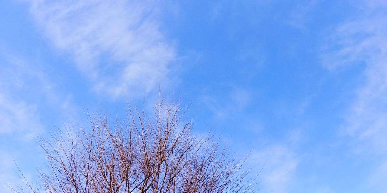 生島 ヒロシ の おはよう 一直線 さっ こ さん の 占い